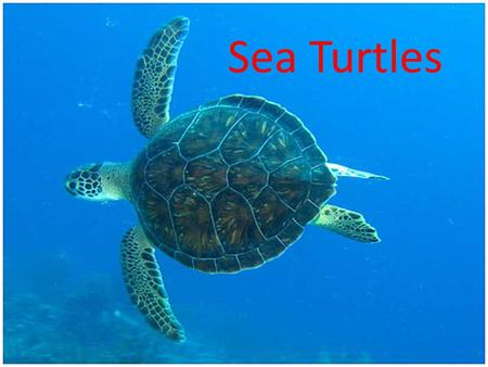 Sea Turtles. Characteristics of Reptiles Dry skin covered with scales Two pairs of legs – except snakes Three chambered heart Well-developed lungs protected.