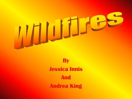 By Jessica Innis And Andrea King. When the native people were living in tribes, wildfires were very common. They would occur around grassy and forested.