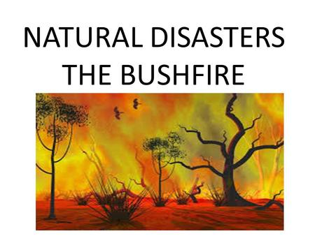 NATURAL DISASTERS THE BUSHFIRE. How do bushfires start?? Bushfires are often very large and burn large areas of land. To start bushfires and wildfires.