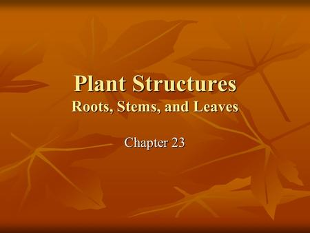 Plant Structures Roots, Stems, and Leaves Chapter 23.