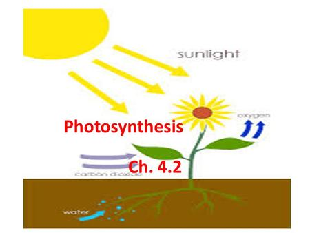 Ch. 4.2 Photosynthesis. I. The Nature of Light A. The Sun is the source of energy on Earth. 1. The light you see is white light. 2. Light passing through.