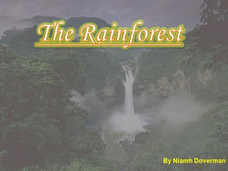 By Niamh Doverman 1. 2 3 3 The worlds largest rainforest in the world is the Amazon rainforest. Rainforests only take up 2-3% of the earths land. 50%
