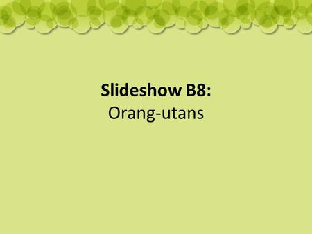 Slideshow B8: Orang-utans. Where do they live? Orang-utans live in the rainforest tree tops of Sumatra and Borneo.