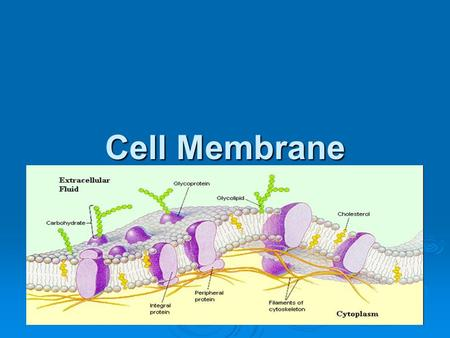 Cell Membrane. Function of Cell Membrane  Separates the cell's contents from materials outside the cell  Regulates what moves in and out of a cell 