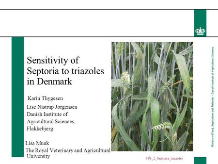 Sensitivity of Septoria to triazoles in Denmark Karin Thygesen Lise Nistrup Jørgensen Danish Institute of Agricultural Sciences, Flakkebjerg Lisa Munk.