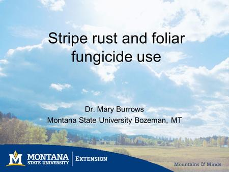 Stripe rust and foliar fungicide use Dr. Mary Burrows Montana State University Bozeman, MT.