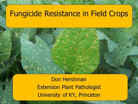 Don Hershman Extension Plant Pathologist University of KY, Princeton Fungicide Resistance in Field Crops.