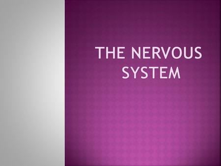  The nervous system has three specific functions:  1. Sensory input. Sensory receptors present in skin and organs respond to external and internal stimuli.