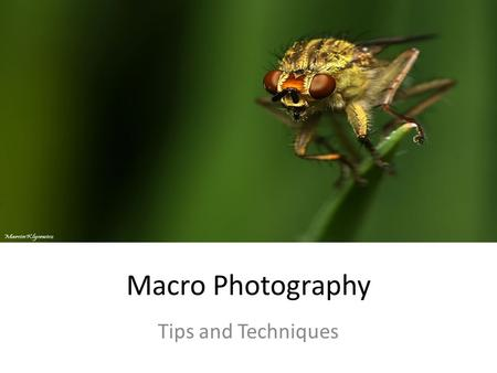 Macro Photography Tips and Techniques. What is Macro Photography The art of taking close- up pictures that reveal details which can't be seen with the.