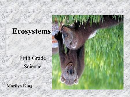 Ecosystems Fifth Grade Science Marilyn King.