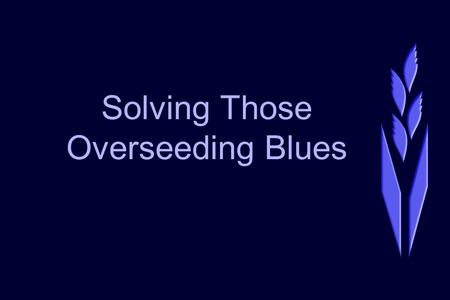 Solving Those Overseeding Blues. Leah A. Brilman, Ph.D. Research Director Seed Research of Oregon www.sroseed.com.