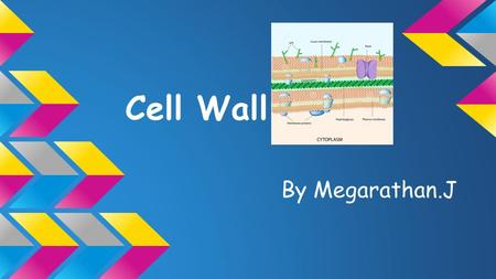 Cell Wall By Megarathan.J. ❖ Gives shape to a cell ❖ provides rigidity to a cell ❖ 10-25 nm thick ❖ 20-30% of the dry weight of the cell ❖ Permeable to.