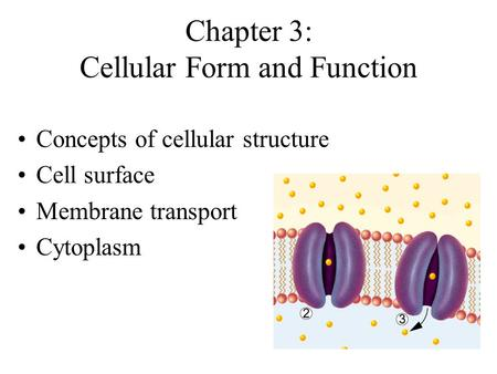 Chapter 3: Cellular Form and Function