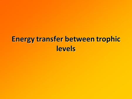 Energy transfer between trophic levels. How much of the Sun's energy is actually converted to organic matter? Why?