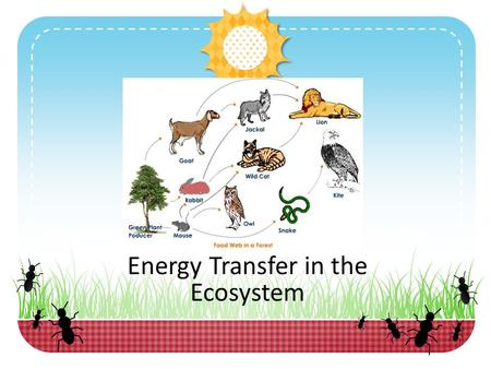 Energy Transfer in the Ecosystem. Engage Pre-Assessment: