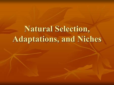 Natural Selection, Adaptations, and Niches Essential Targets: Define the terms: Natural Selection, Adaptation, and Niche Define the terms: Natural Selection,