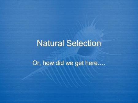 Natural Selection Or, how did we get here….. Natural Selection  The Theory of Natural Selection is so simple that anyone can misunderstand it…. (Anonymous)