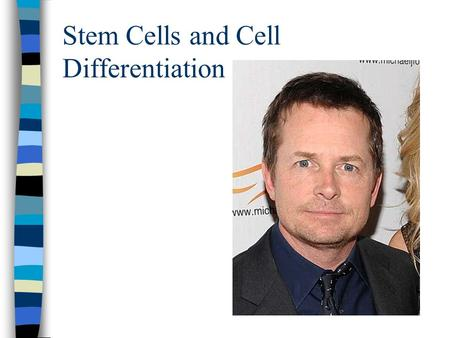 Stem Cells and Cell Differentiation. 1. What are Stem Cells? a. Stem cells are different from all other cells in the body. b. Stem cells have 2 distinct.
