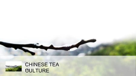 CHINESE TEA CULTURE Lily. CONTENTS origin ofChinesetea classification oftea roasting and brewing.