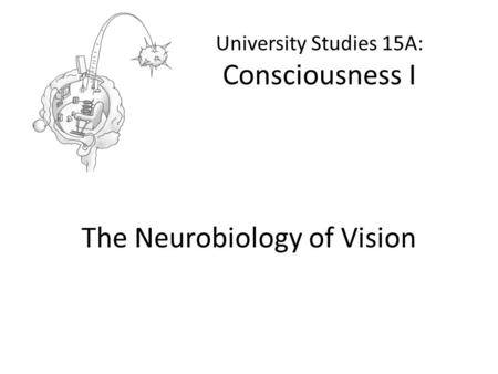 University Studies 15A: Consciousness I The Neurobiology of Vision.