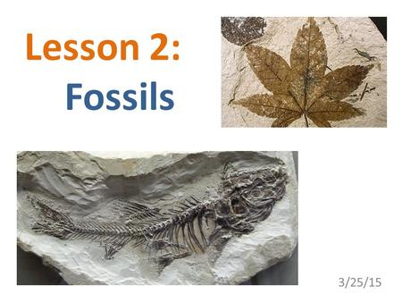 Lesson 2: 	Fossils 3/25/15.