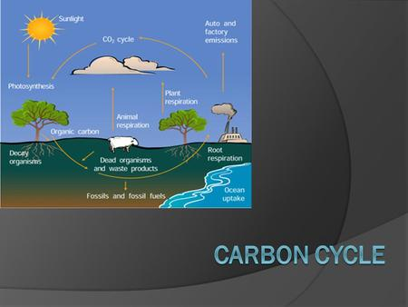Carbon Cycle  The movement of carbon from the non- living environment into living things and back.