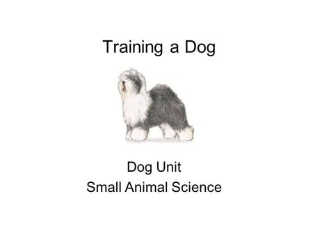 Training a Dog Dog Unit Small Animal Science. The amount and type of training depends on expectation of dog. All dogs should learn these 5 basic commands.
