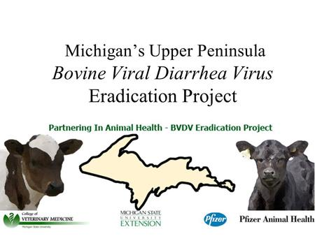 Michigan's Upper Peninsula Bovine Viral Diarrhea Virus Eradication Project.