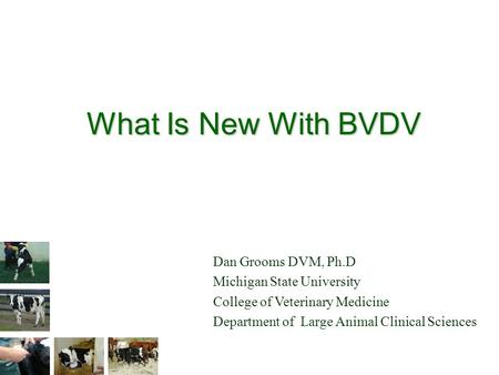 What Is New With BVDV Dan Grooms DVM, Ph.D Michigan State University