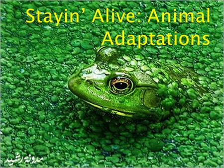  Adaptation- a special trait that helps an organism survive  Animals have adaptations for: ◦ protection ◦ finding food ◦ moving ◦ reproduction ◦ living.