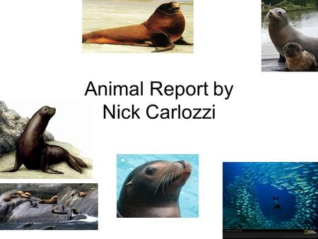 Animal Report by Nick Carlozzi
