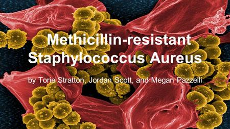 Methicillin-resistant Staphylococcus Aureus by Torie Stratton, Jordan Scott, and Megan Pazzelli.