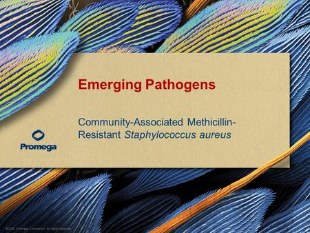 ©2008, Promega Corporation. All rights reserved. Emerging Pathogens Community-Associated Methicillin- Resistant Staphylococcus aureus.