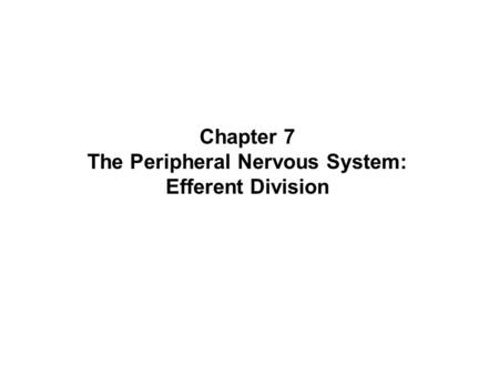 Chapter 7 The Peripheral Nervous System: Efferent Division.