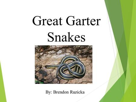 Great Garter Snakes By: Brendon Ruzicka. What does my animal look like? Garter snakes can be yellow, green, and orange. They have scales all over their.