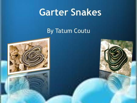 Garter Snakes By Tatum Coutu. Why are people afraid of snakes? Why are people so afraid of snakes if there are no poisonous in Rhode Island? Is it because.