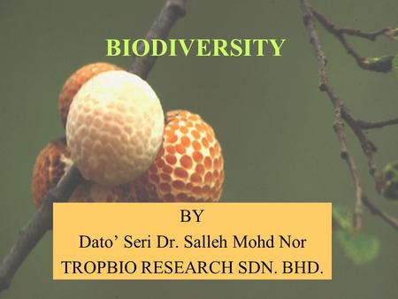 BY Dato' Seri Dr. Salleh Mohd Nor TROPBIO RESEARCH SDN. BHD. BIODIVERSITY.