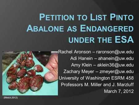 P ETITION TO L IST P INTO A BALONE AS E NDANGERED UNDER THE ESA Rachel Aronson – Adi Hanein – Amy Klein –