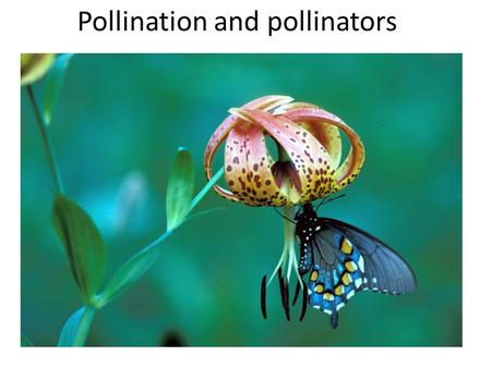 Pollination and pollinators. Many types of pollinators.