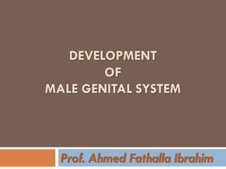 DEVELOPMENT OF MALE GENITAL SYSTEM Prof. Ahmed Fathalla Ibrahim.