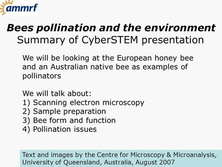 Bees pollination and the environment Summary of CyberSTEM presentation We will be looking at the European honey bee and an Australian native bee as examples.