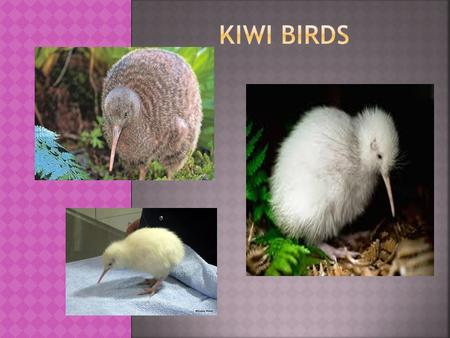 Kiwi are endemic to the island country of New Zealand.