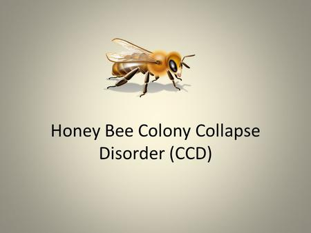 "Honey Bee Colony Collapse Disorder (CCD). ""Virus Implicated in Bee Decline"" Israeli Acute Paralysis Virus (IAPV) was found in collapsed bee colonies."