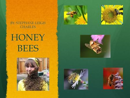 HONEY BEES BY: STEPHANE-LEIGH CHARLES. THE LIFE CYCLE OF A HONEY BEE  The queen lays each egg in a different cell of the honey comb.  As soon as the.