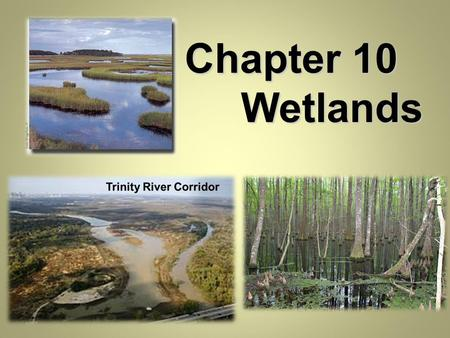 Chapter 10 Wetlands. I. What determines a Wetland? A. The nature and properties of wetlands varies widely in Texas and worldwide, wetlands are typically.