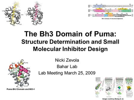 The Bh3 Domain of Puma: Structure Determination and Small Molecular Inhibitor Design Nicki Zevola Bahar Lab Lab Meeting March 25, 2009.