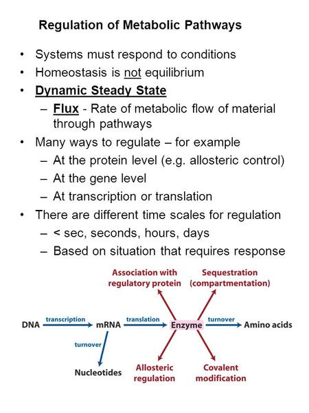 Regulation of Metabolic Pathways Systems must respond to conditions Homeostasis is not equilibrium Dynamic Steady State –Flux - Rate of metabolic flow.