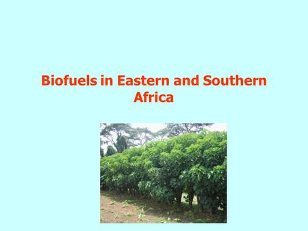 Biofuels in Eastern and Southern Africa. Outline Overview of energy sector Bio-energy Bio-fuels – Status and Trends –Bioethanol –Biomass cogeneration.