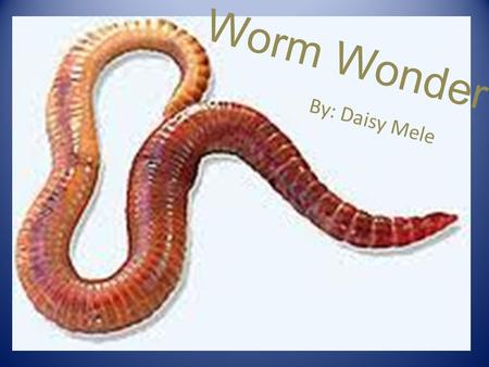 Worm Wonder By: Daisy Mele. Question/ Reason: How long does it take.5 kilograms of red wiggler worms to digest.5 kilograms of organic waste.