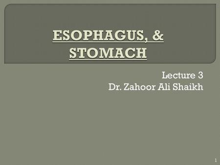 Lecture 3 Dr. Zahoor Ali Shaikh 1.  Esophagus is straight muscular tube that extends from the pharynx to the stomach.  It lies in the thoracic cavity.